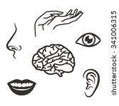 parts of the face and body of... | Shutterstock .eps vector #341006315