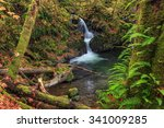 Waterfall In The Quinault...