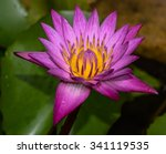 Lotus Buds Lotus Flower And...