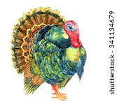 isolated watercolor turkey on... | Shutterstock . vector #341134679