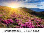 view of the magic pink... | Shutterstock . vector #341145365