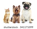Stock photo cute pets isolated on white 341171099