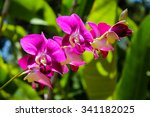 Beautiful Orchids From The...