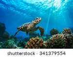 Stock photo beautiful underwater postcard maldivian sea turtle floating up and over coral reef loggerhead in 341379554