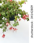 Hanging Basket Of Red And Whit...