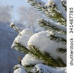 The Spruce Branches Under The...