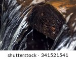 Closeup Of A Wet Log In A...