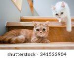 Stock photo cat 341533904