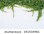 ivy leaves isolated on a white... | Shutterstock . vector #341534981
