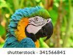 Portrait Of A Colored Parrot