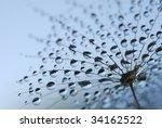 Close Up Of Soft Dandelion...
