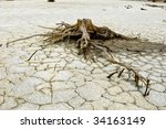 Close Up Of Dry Tree Stump In...