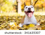Stock photo portrait of a happy dog 341635307