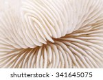 Background Of Seashell Of...