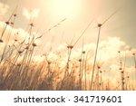 blurred grass flower background ... | Shutterstock . vector #341719601
