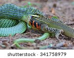 the golden tree snake ... | Shutterstock . vector #341758979