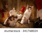 santa claus playing with cats ... | Shutterstock . vector #341768024