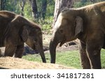 Elephants Are Large Mammals Of...