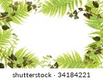 fern and ivy frame | Shutterstock . vector #34184221