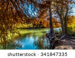 bright cypress trees with fall... | Shutterstock . vector #341847335