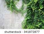 Abstract Plant Wall Background  ...