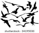 variety flying sea gulls vector ...