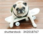 Stock photo the pug dog wearing soldier suit playing skateboard on wooden floor 342018767