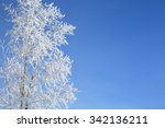Snow Branches On The Tree At...