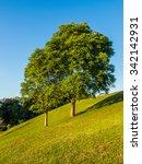 Small photo of Big Trees in Sunny Day at Doi Samer Doa, Nan Province, Thailand