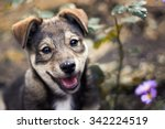 Stock photo cute puppy among the grass and flowers 342224519
