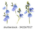 gentle blue flowers on a white... | Shutterstock . vector #342267017