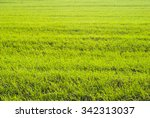 agricultural field | Shutterstock . vector #342313037