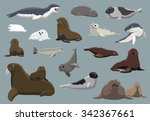 various seals set cartoon... | Shutterstock .eps vector #342367661