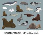 Various Seals Set Cartoon...