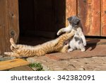 Stock photo two little funny kittens playing outdoors in summer close up 342382091