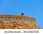 Small photo of Acridotheres Wong acridotheres starlings.
