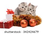 Stock photo two gray kittens sibs with christmas gifts and coppery and golden decorations isolated on white 342424679