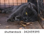 Lazy   Sleepy Black Cat Starin...