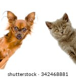 Stock photo cat and dog look out isolated on white background 342468881