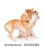 Stock photo cat hugs puppy isolated on white background 342503381