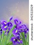 Fresh Blue  Irises Flowers  On...