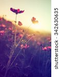 cosmos flowers in vintage style ... | Shutterstock . vector #342630635