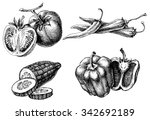 vegetables isolated set  etch... | Shutterstock .eps vector #342692189