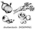 vegetables collection  hand... | Shutterstock .eps vector #342694961