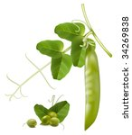 vector illustration. green peas. | Shutterstock .eps vector #34269838
