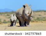 African White Rhino  National...
