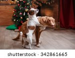 dog jack russell terrier and... | Shutterstock . vector #342861665
