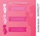 vector illustration of pregnant ... | Shutterstock .eps vector #342902177