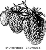 vector illustration of... | Shutterstock .eps vector #34295086