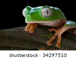 Tree Frog Green Frog Tropical...